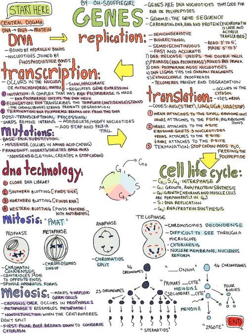 transcription-of-dna-into-rna-medicaltone