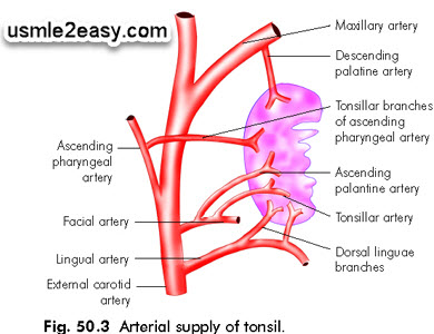 Tonsils: Blood supply nice [mnemonic]