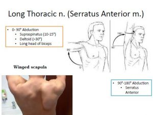Anatomy Review [Uworld Supplement to First Aid]